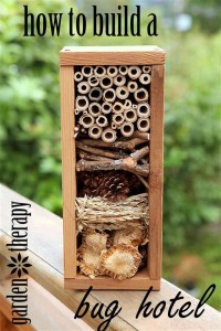 insect hotel reno