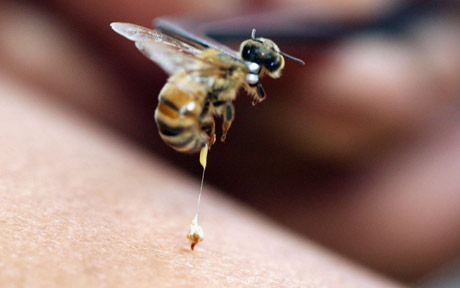 bee sting good for you