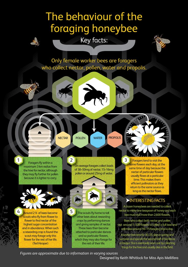 save bees all native bees