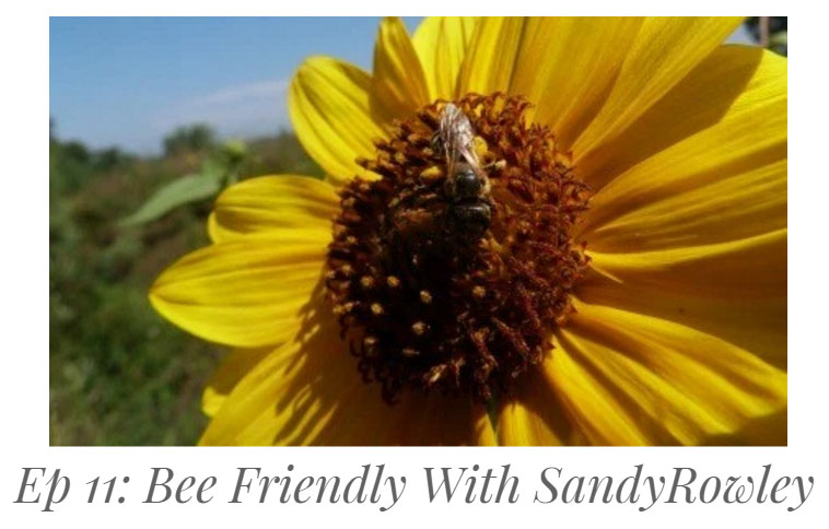 bee frieindly with sandy rowley